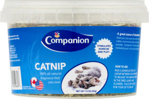 Companion Catnip