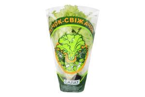Салат зелений Пучок-Свіжачок