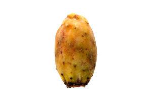 Кактус плод