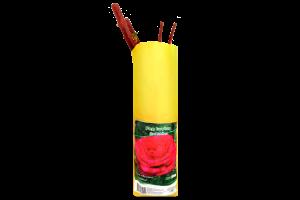 Саженцы Роза акция пакет