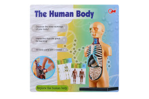 Игрушка-фигурка Человеческое тело D*-2