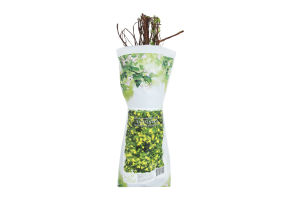Саженцы декоративные цветущий пакет
