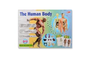 Игрушка-фигурка Человеческое тело D*-4