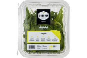 Gotham Greens Arugula