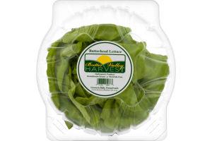 Butter Valley Harvest Butterhead Lettuce