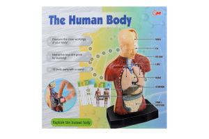 Игрушка-фигурка Человеческое тело D*-3