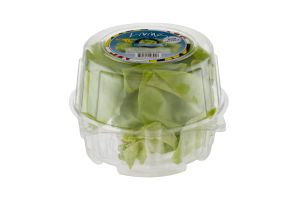Baywater Greens Living Lettuce