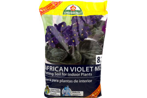 ASB Greenworld African Violet Mix
