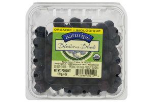 naturipe Organic Blueberries Bleuets